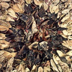 Melkhout 3, Annie le Roux, documentation of land art