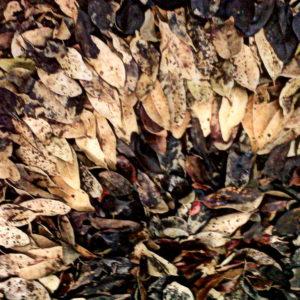Melkhout 7, Annie le Roux, documentation of land art