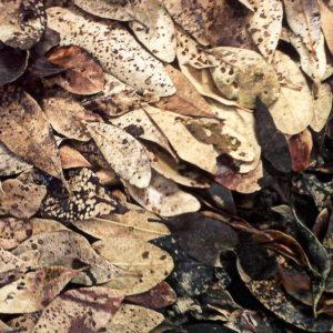 Melkhout 8, Annie le Roux, documentation of land art