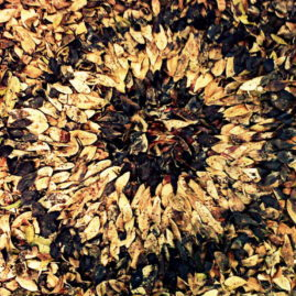 Melkhout land art or leaf mandala by Annie le Roux